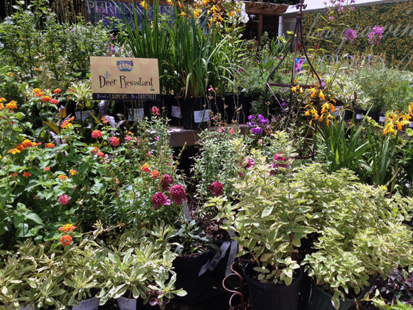 Perennials- Deer Resistant- Garden Supply Co