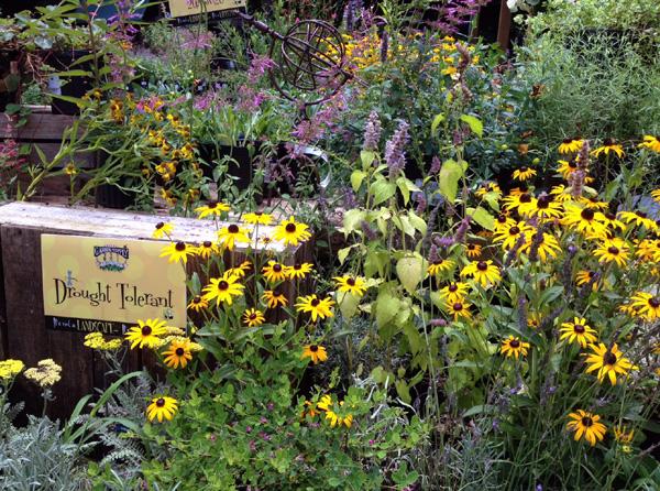 Perennials  Drought Tolerant  Garden Supply Co