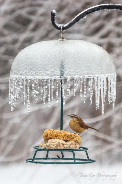 icy bird