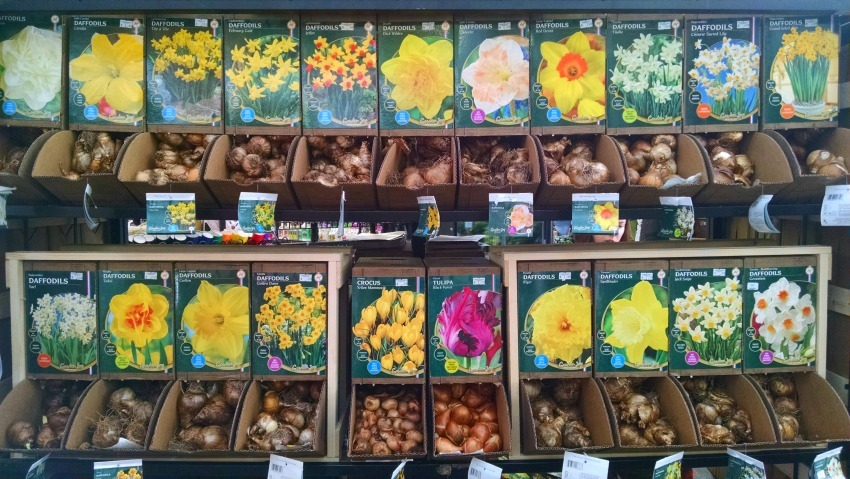 Selection of Spring Bulbs