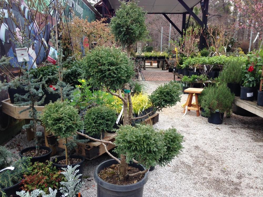 Boulevard Topiary