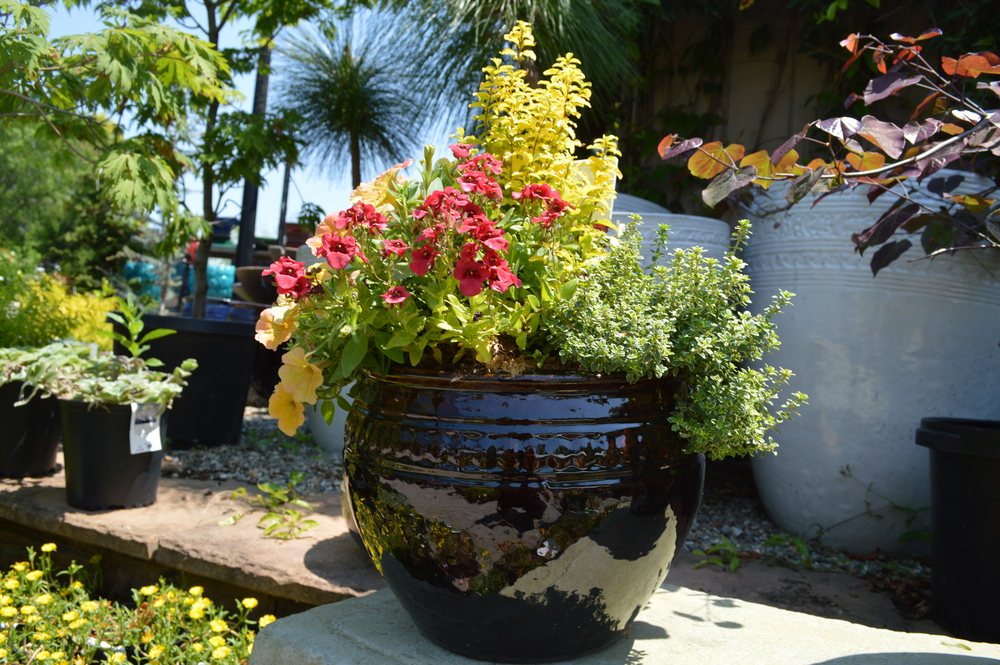 Captivating Container Garden