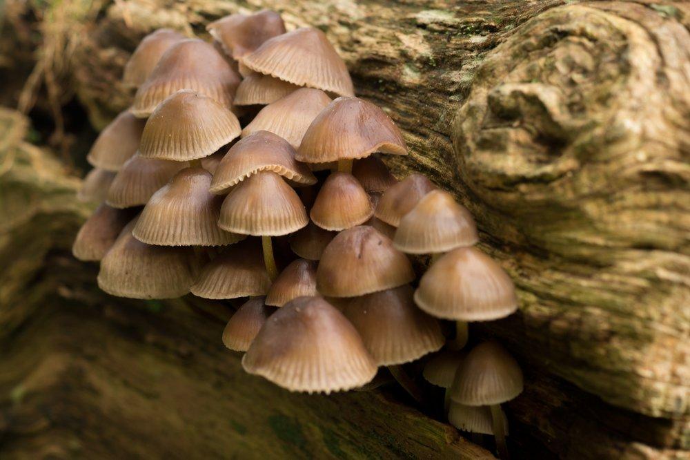 forest-fungi-fungus-4215.jpg