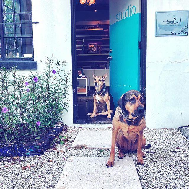 Let's do this Monday! #studiolife #backtoart #tada #studiodog #dogslife #artistlife