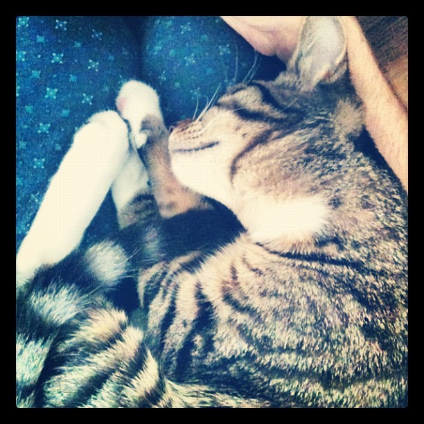 At least one of us is asleep (Taken with  Instagram )