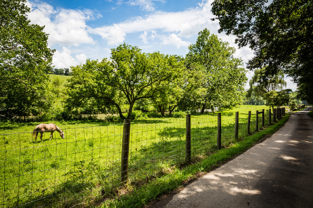 Shallowford Farm-54.jpg