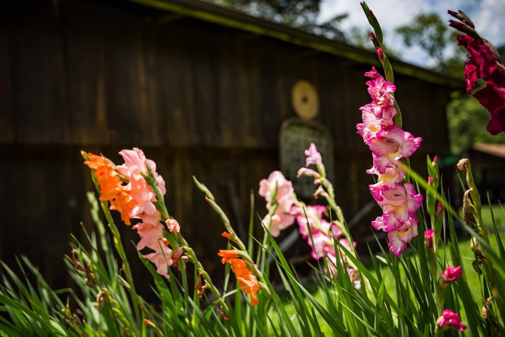 Shallowford Farm-22.jpg