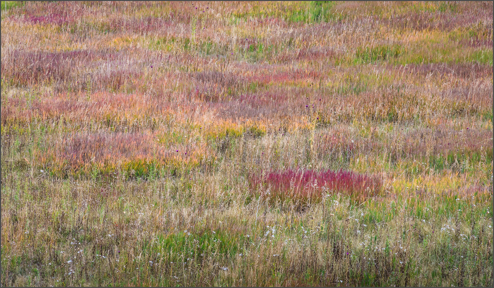 High Mountain Grasses