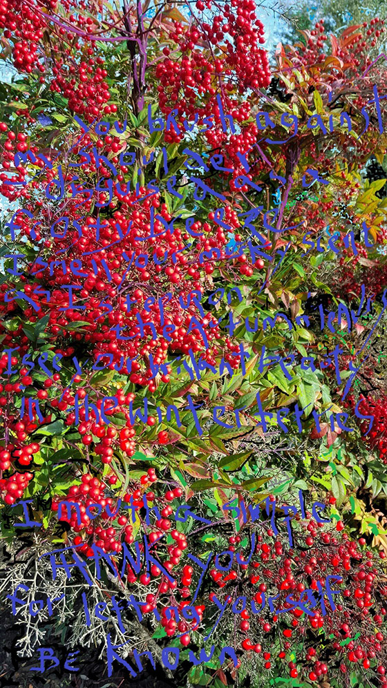 i feel you brush my shoulder disguised as a frosty breeze i smell your musky scent as I step upon the autumn leaves i see your brilliant beauty in the winter berries i mouth a simple thank you for letting yourself be known  copyright TClare 2016