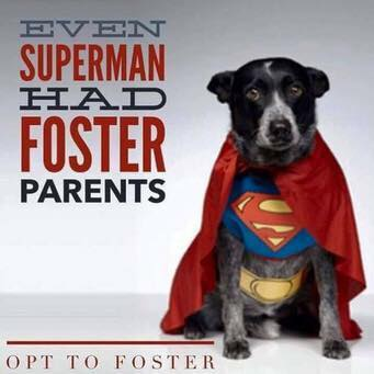 Complete your Foster Application today. -