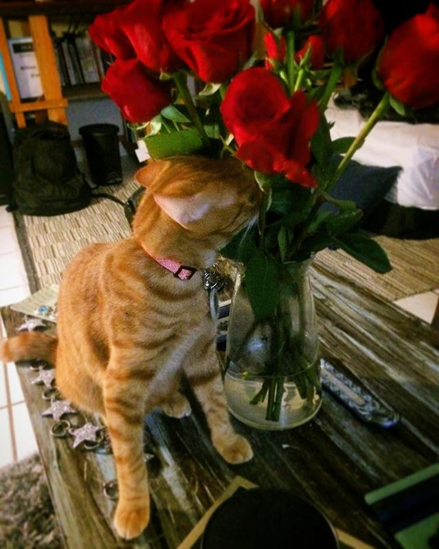 Happy #valentinesday. Be sure to stop and smell the roses, like young Franco cat, here. . . . . #cat #kitty #catsofinstagram #cats #cattakeovermyIG