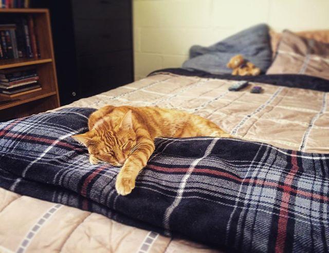 🐱#cat #nap