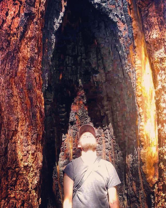Beam me up. 🌲👽 📷: @jeepsea . . . . . #tree #treeship #mothership #travel #treegram #instatree #instatravel