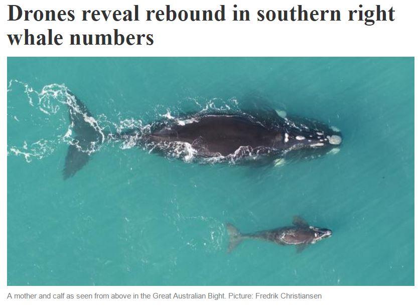 Australian_Whale Image.JPG