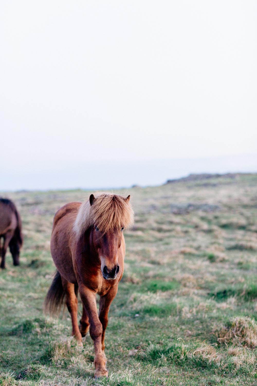 Jen_Montgomery_Photography_Wildhorses.jpg