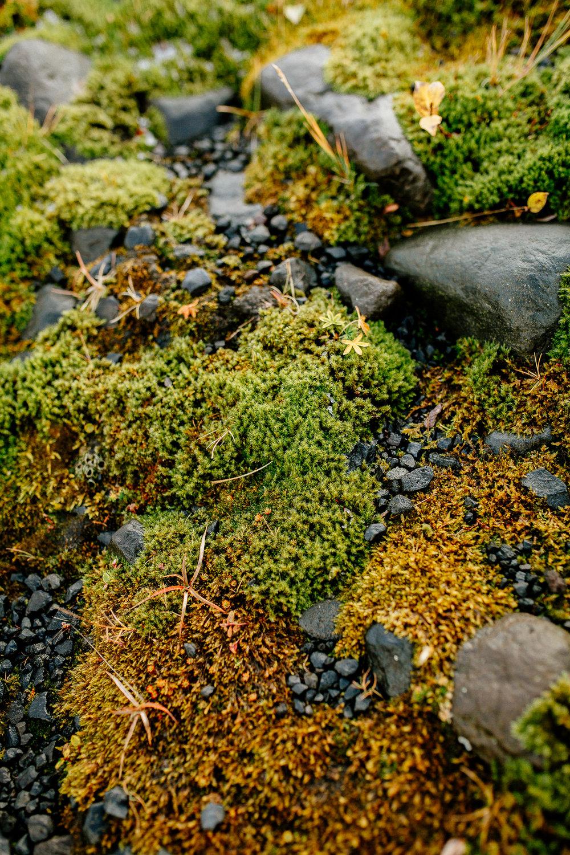 Jen_Montgomery_Photography_Engagement_Iceland_JenAlex_FB-37.jpg