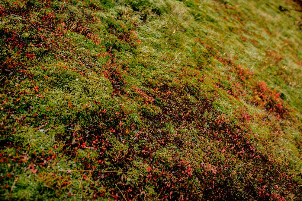 Jen_Montgomery_Photography_Engagement_Iceland_JenAlex_FB-41.jpg