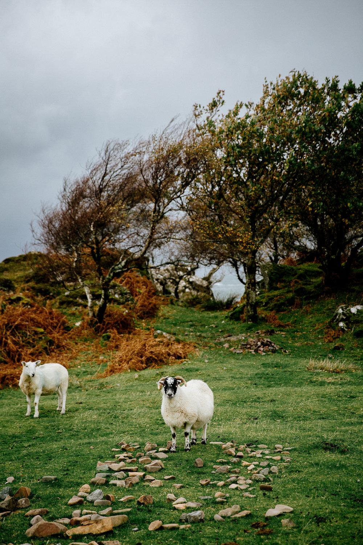 Jen_Montgomery_Photography_Scotland_Wedding_CorrieWill_FB-124.jpg