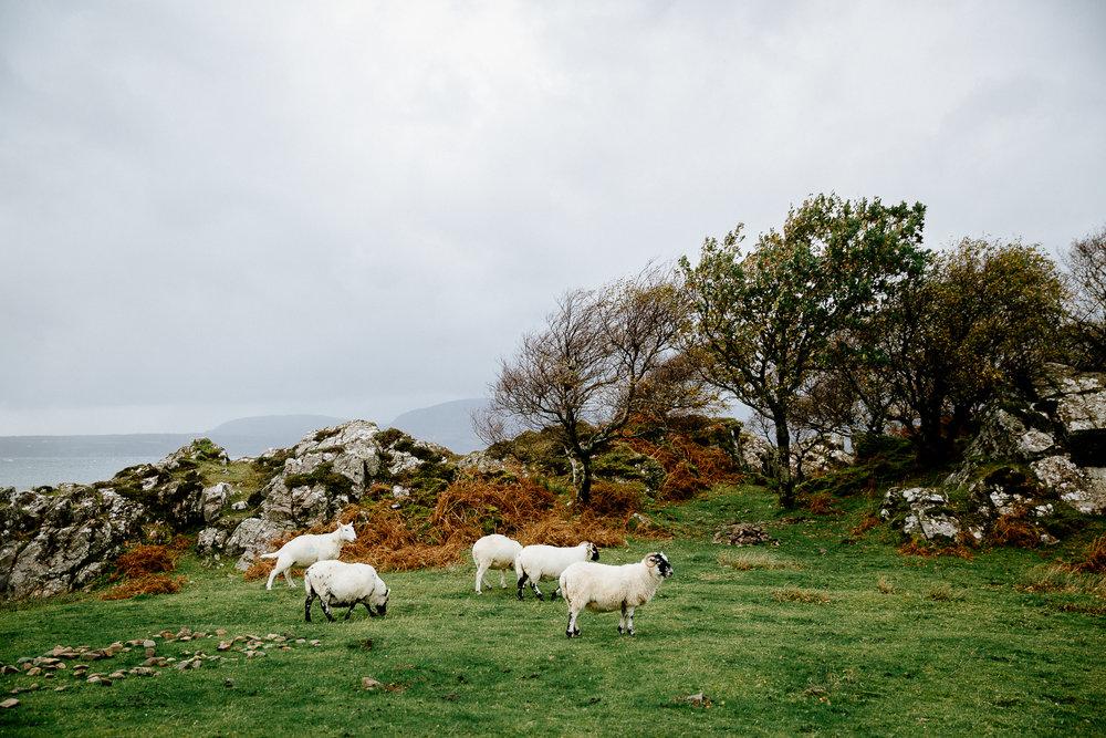 Jen_Montgomery_Photography_Scotland_Wedding_CorrieWill_FB-126.jpg