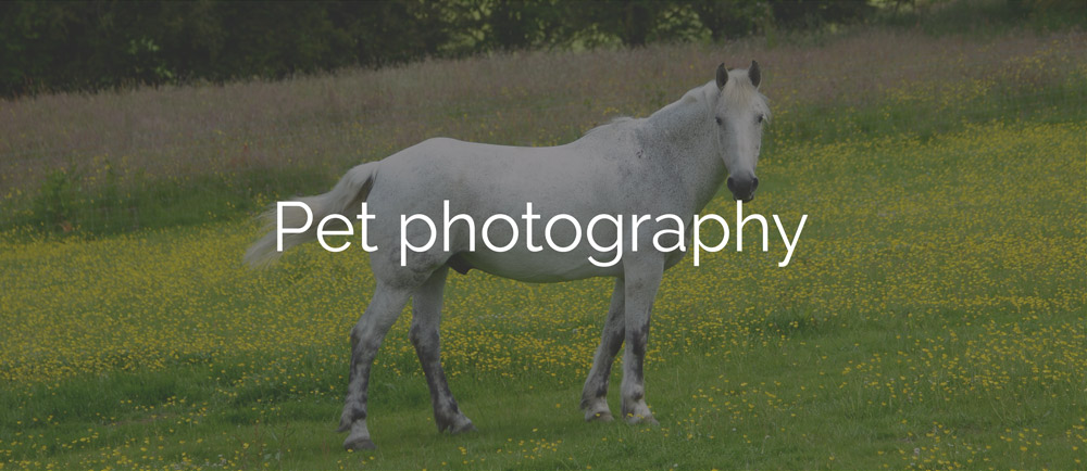 pet photography north wales