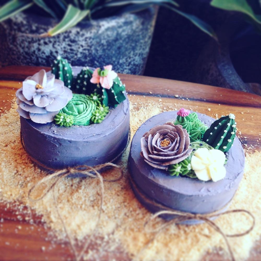 mini succulent cakes