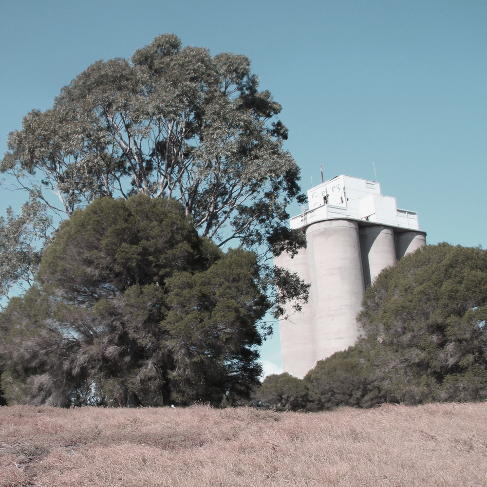 The existing site contained a huge diversity of vegetation and a sloping topography, which allowed the silos to be viewed from different vantage points.
