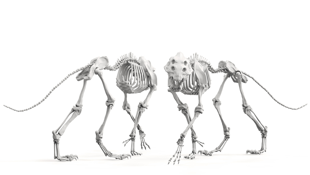 SkeletonComp1.jpg