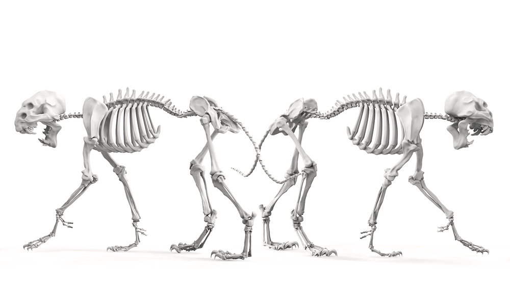 SkeletonComp2.jpg