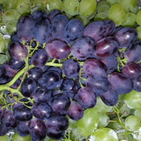 Grapes Rabiye