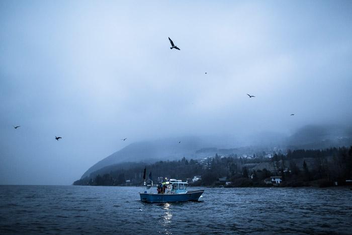 Pêche matinale sur le Léman. Sur une embarcation voisine, cernée par les mouettes, le frère d'Eric Jacquier pêche les Perches.