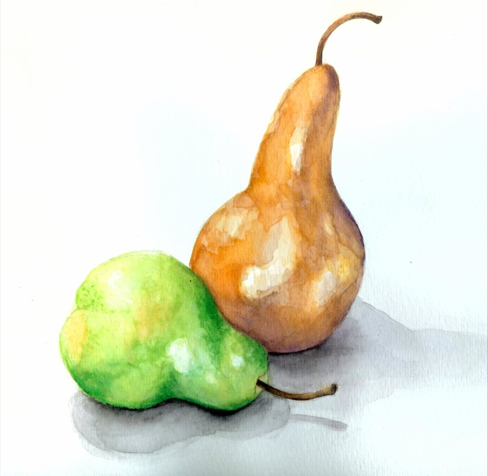 Watercolor botanical pear illustration by Ashley Cassandra Chase