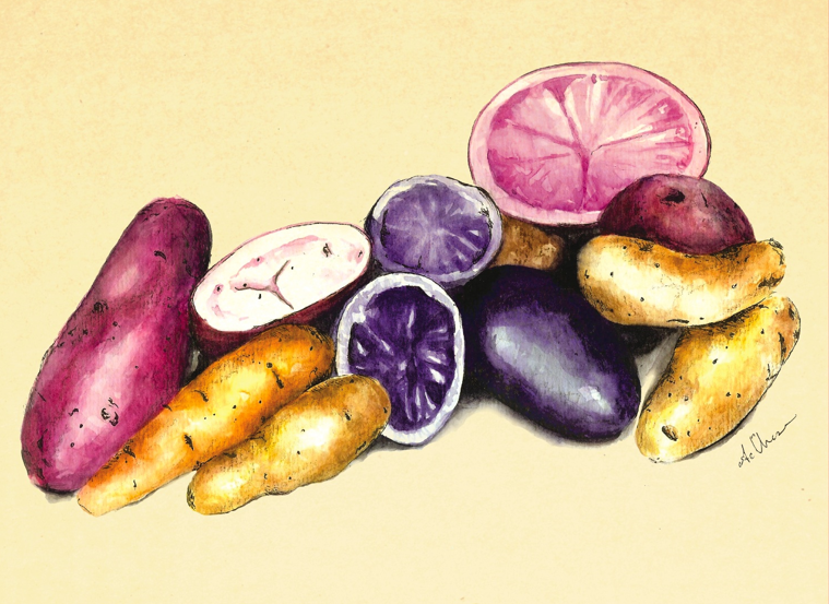 ashleychase potatoes watercolor.png