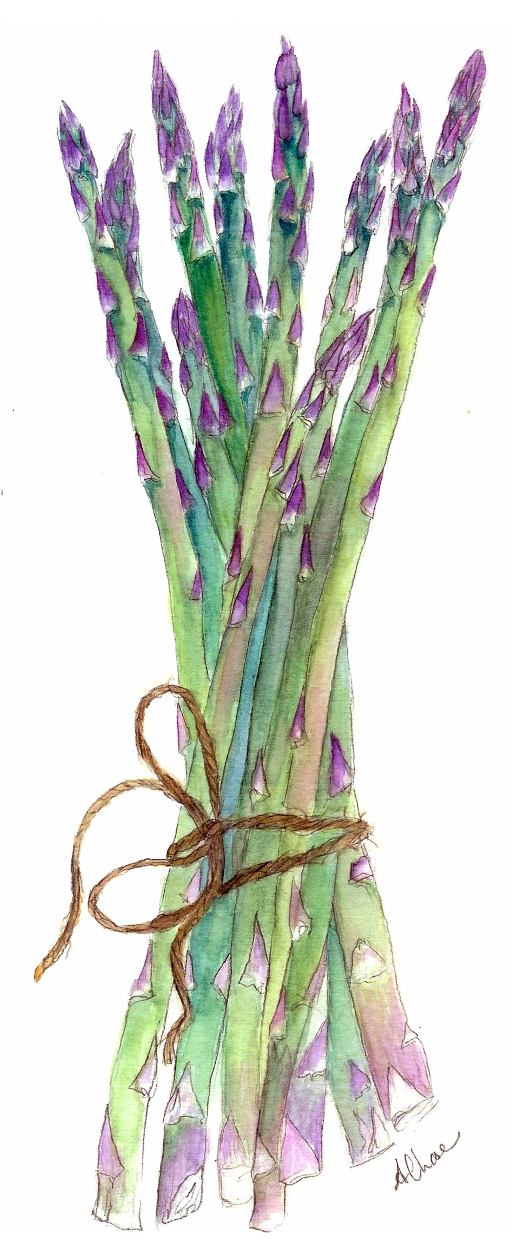 ASPARAGUS ASHLEYCHASE WATERCOLOR.jpg