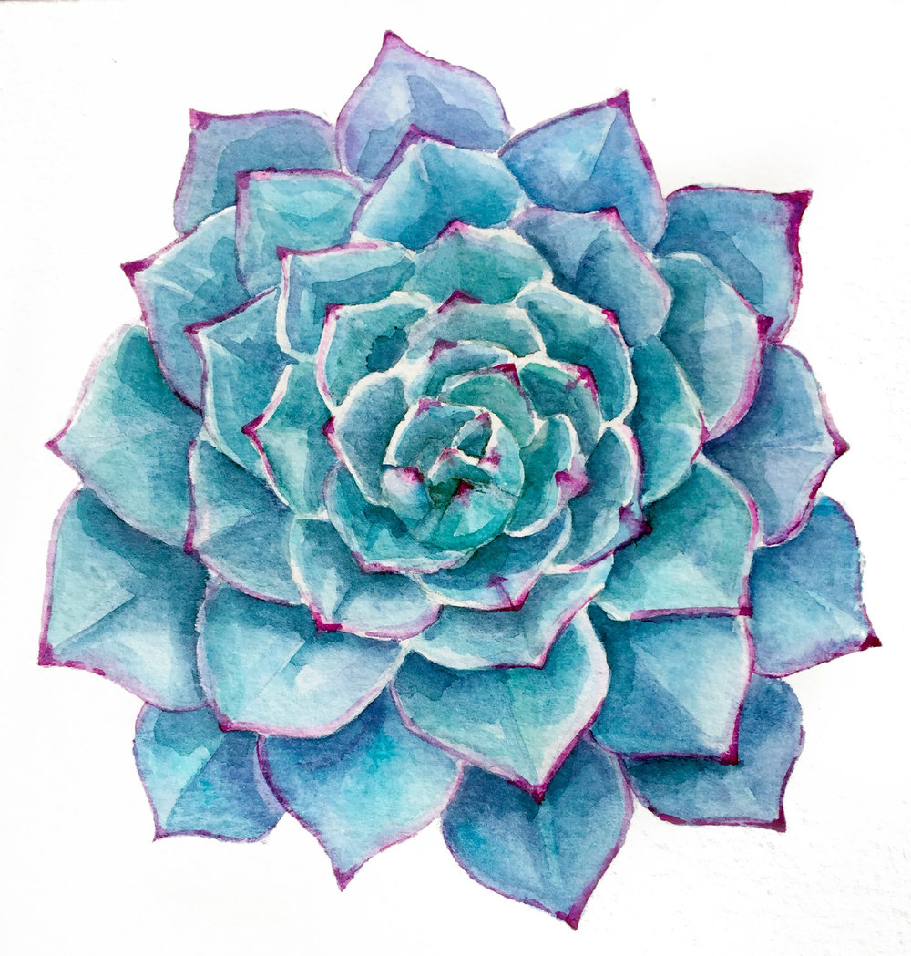 Watercolor succulent painting