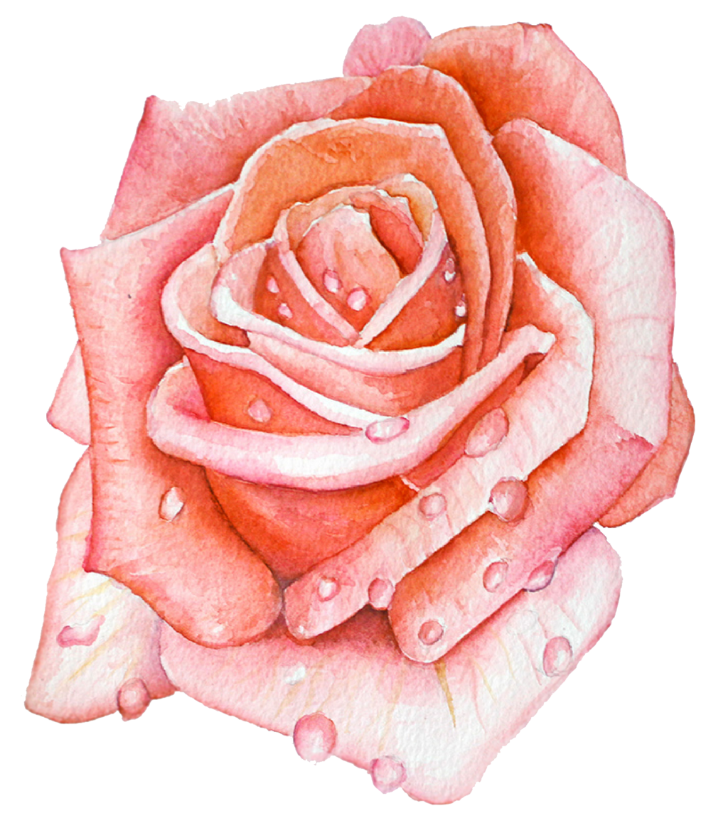 ASHLEYCHASE WATERCOLOR ROSE.png