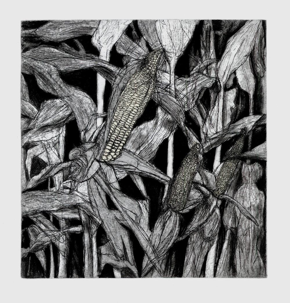 El Maiz