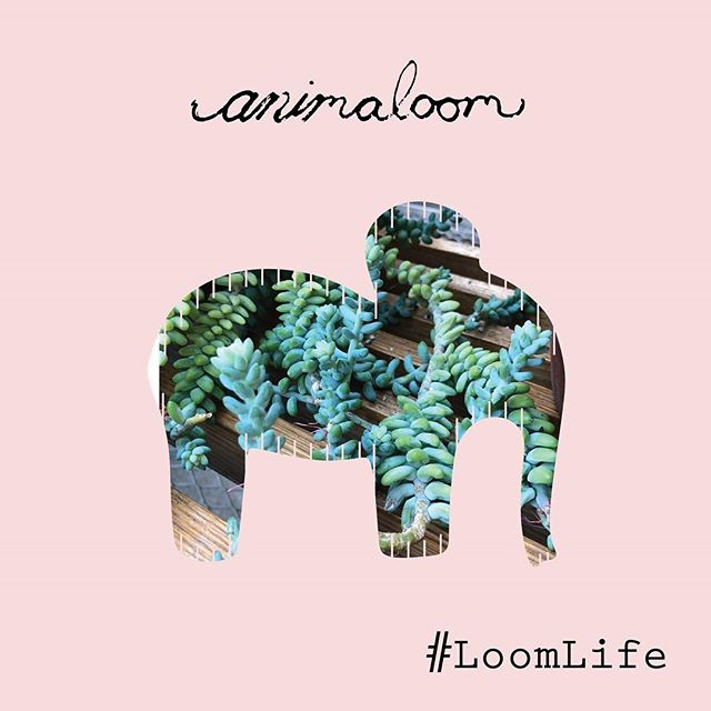 Life, Plants, & Looms What more could you ask for?  #loomlife #looms #plants #elephants #weavingofinstagram #weaving