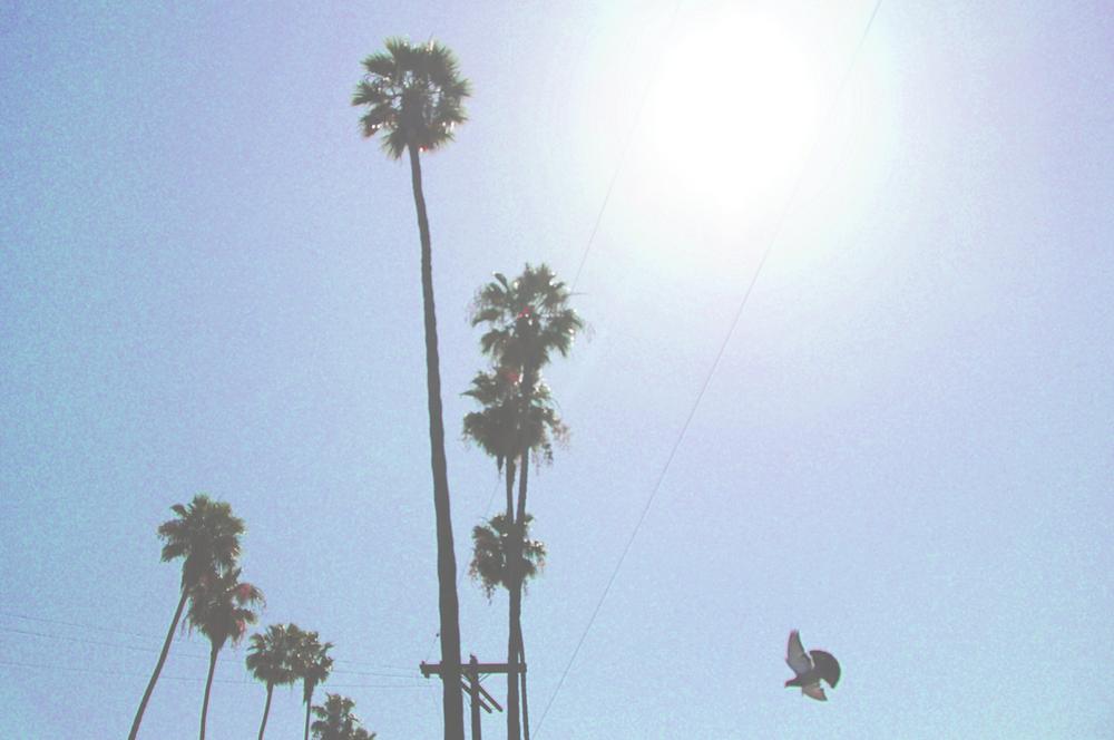 palmTreeBird2.jpg