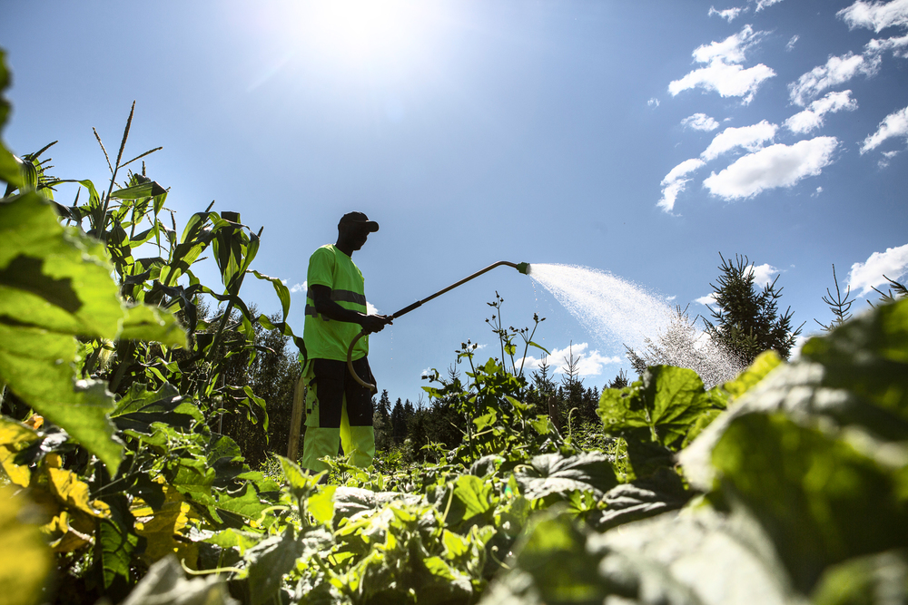Anonymous inmate works as organic farmer in Kerava prison.  © Maaseudun Tulevaisuus