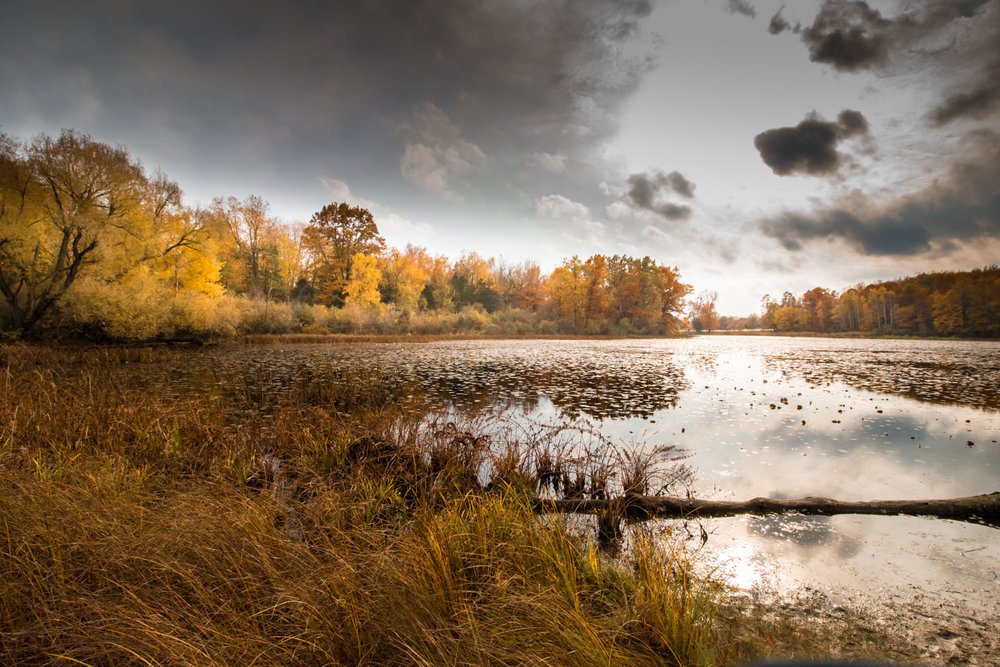 Autumn, Wildwing Lake