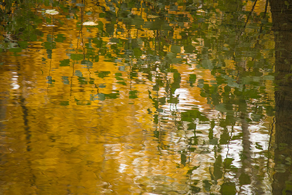 Liquid Light: Autumn Gold