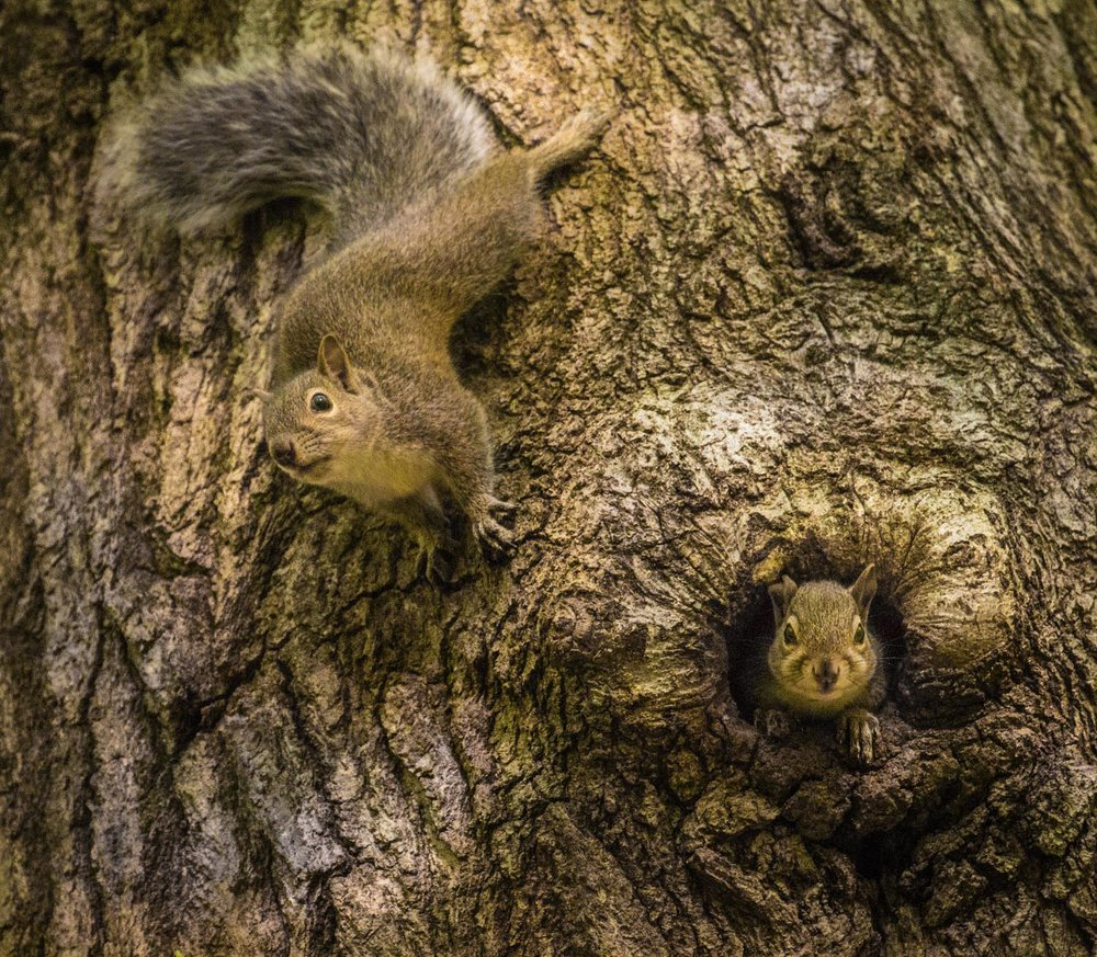 Tree and Squirrel Play