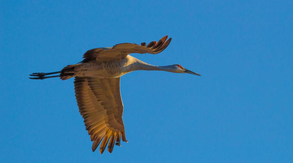 Crane Above
