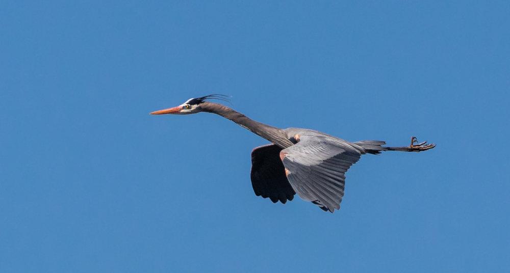 Heron Whimsy