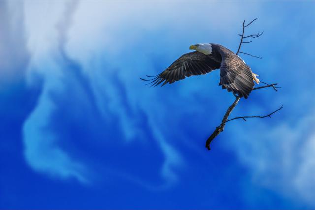 Eagle Sky Branch