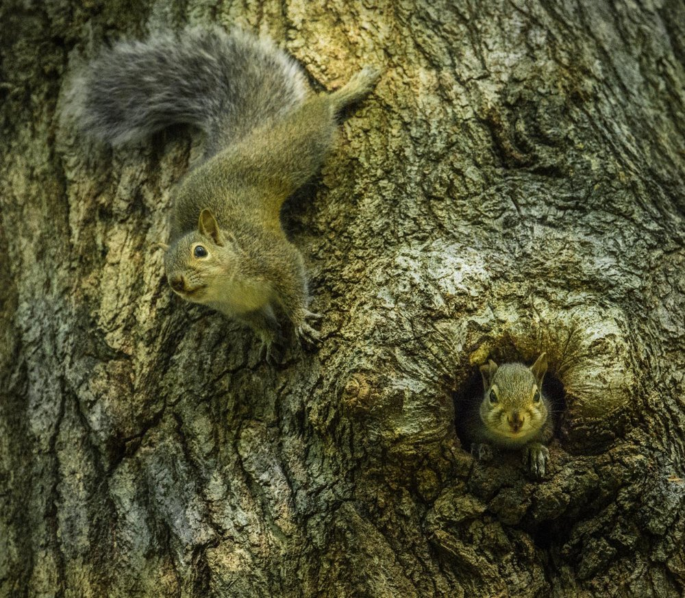 Squirrel Tree Play