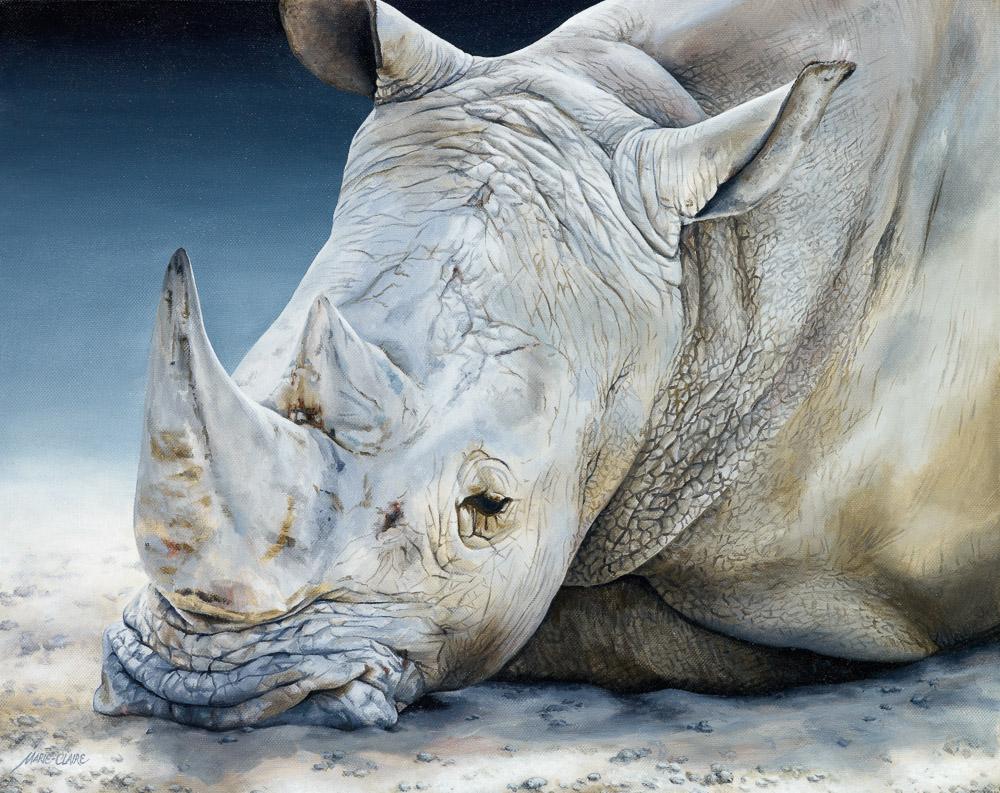 Africa Dozing White Rhino