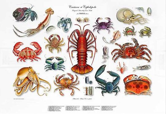 FA Crustacea.png