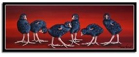 Pukeko Chicks