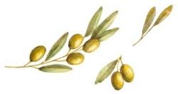 olivedivider.jpg